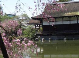 טיול מאורגן ליפן בסתיו בשלכת האדומה.