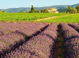 טיול מאורגן לדרום לצרפת - פרובנס