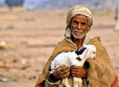 רועה עזים במצרים