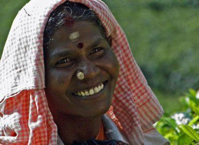 קוטף תה בהודו