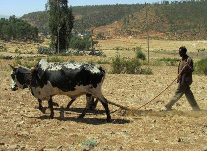 באהר דאר אתיופיה