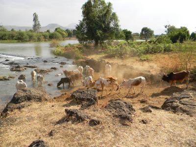 הניולס באתיופיה